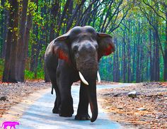 ELPHANT-CORBETT. | A community of wildlife photographers to share their photographs, experiences and follow other wildlife photographers.