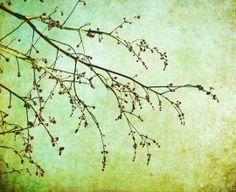 A New Start - Nature photography - Green home decor - tree branches - aqua - botanical art print - 8x10 Fine Art Photography Print. $30.00, via Etsy.