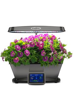 Bounty Elite Plants Grown In Water Plant Needs Indoor 640 x 480
