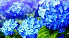 Anime Flower Scenery Wallpaper Desktop Wallpaper Res: Added on February 22 Tagged : Wallpaper Flower at MoshLab Wallpaper Blue Flower Wallpaper, Anime Scenery Wallpaper, Flower Petals, Blue Flowers, Anime Flower, Stained Glass Flowers, Blue Wallpapers, Wallpaper Desktop, Blooming Plants