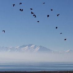 #vangölü #tr_turkey #ig_turko #ig_turkiye #visitturkey #ig_naturebest #sendmeyoursunset #lakes #lake #Turkey #nature #naturelovers #natureza #nature_perfection #nature_shooters #naturegram #natureza  #mountain #snow #sky #birds #rsa_nature_birds #animal #travelingram #travellers #traveller #travelling #travelgram #travelphotography by seda_ve_latte
