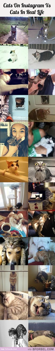 12 Cats On Instagram Vs Cats In Real Life…