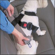 1000+ images about dog belts on Pinterest | Dog Seat Belt ...