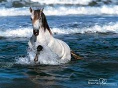 arabian running in Ocean
