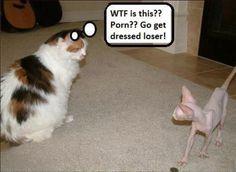 Funny Stupid Cats