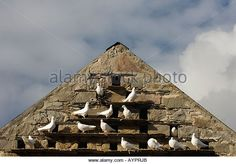 Pigeon Roost in Eve of Old Stone Building Ardchattan Priory Near North Connel Scotland - Stock Image
