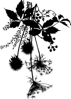 Chinese Paper Cutting, Black Leaves, Design Research, Design Seeds, Boarders, Border Design, Vintage Images, Baroque, Kurti