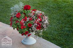 HGTV HOME Plants - Red Sparkle™