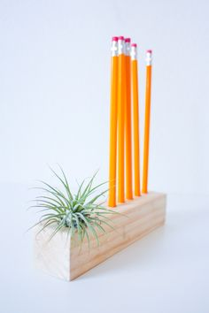 Simple Pencil and Air Plant Holder DIY