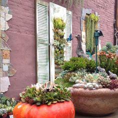 Peter Loyola's Succulent Cafe via Katherine Tracey