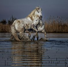 Playing Stallions.... by Paul Keates