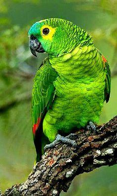 Training Your Pet Parrot Funny Birds, Cute Birds, Pretty Birds, Beautiful Birds, Animals Beautiful, Parrot Pet, Parrot Bird, Colorful Parrots, Colorful Birds
