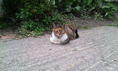 Cats, Animals, Animals And Pets, Gatos, Animales, Animaux, Animal, Cat, Animais