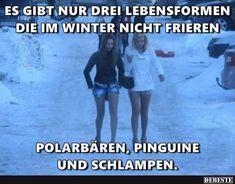Es gibt nur drei Lebensformen die im Winter nicht frieren..   Lustige Bilder, Sprüche, Witze, echt lustig