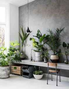 Inspiration - Indendørs planter - Urban Jungle Office www. Botanical Interior, Interior Plants, Industrial Living, Industrial Interiors, Decoration Plante, House Plants Decor, Living Room Pictures, Apartment Design, Beautiful Interiors