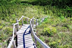 Hiking the Alexander Murray Trail near King's Point, Newfoundland - Hike Bike Travel Garden Stairs, Garden Bridge, Canada Eh, Newfoundland And Labrador, Camping Stuff, Quebec City, Canoeing, Super Natural, Canada Travel