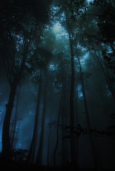 Dark forest but a hint of light attempts to shine through the canopies. I like the colors of this one with the bluish fog. Certainly adds color rather than make the environment of the game feel too plain. Beautiful Places, Beautiful Pictures, Dark Photography, Fantasy Landscape, Night Skies, Beautiful Landscapes, Scenery, Night Forest, Mystical Forest