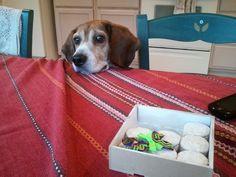 Would you be mine ~ Beagle Nero