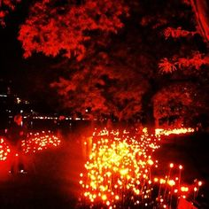 Lucy Light Forest | at DCR's Boston Esplanade October 3rd-13th