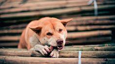 ¿Tu perro lame las paredes? Conoce algunos de los motivos. Tu perro puede lamer los muros de tu casa por alguna carencia en su dieta o por estrés.