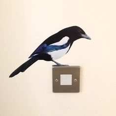Meet Mordor the Magpie! He has been produced actual size from my original painting, as a print on to re-stickable & removable vinyl wall art for your home. Vinyl Wall Stickers, Vinyl Wall Art, Wall Decals, Blue Jay, Pretty Art, Magpie, Modern Classic, Wood Projects, Original Paintings