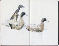 Will Freeborn - Indian running ducks Watercolor Sketchbook, Sketchbook Drawings, Artist Sketchbook, Watercolor Bird, Drawing Sketches, Sketching, Animal Sketches, Sketchbook Inspiration, Bird Art