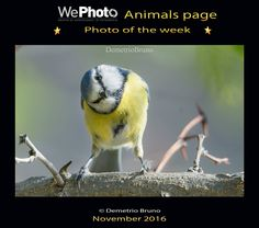 WePhoto Animals 14/11/2016