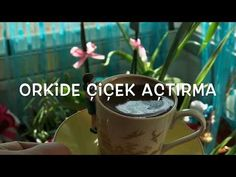 Orchid Blooming does not bloom! Plant Breeding, Balcony Flowers, Growing Orchids, Diy Porch, Fast Growing, Youtube, Diy And Crafts, Bloom, Tableware