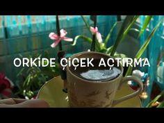 Orkide Çiçek Açmıyor!Dal vermiyor ne yapmalıyım?l Orchid Blooming !!! - YouTube