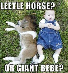 Leetle horse, or giant bebe?