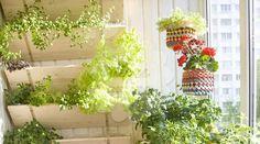 Incrível! Impressionante! Das paredes ao teto, lindos jardins suspensos - # #dicasdedecoração #jardim #jardimvertical
