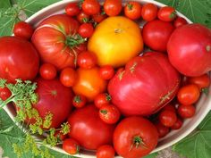 No seeds required — seriously! Growing Tomato Plants, Growing Tomatoes From Seed, Growing Fruit Trees, Growing Vegetables, Grow Tomatoes, Growing Tomatoes In Containers, Gardening Vegetables, Tomato Garden, Fruit Garden