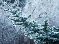 @SteBoGrafie: #eiskalt heute beim winterlichen Spaziergang am 2. Advent #ice #icecold #winter #frost-covered