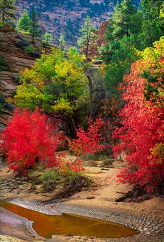 Fall colors in Zion National Park, Utah, United States. Foto Nature, All Nature, Beautiful World, Beautiful Places, Beautiful Pictures, Zion National Park, National Parks, Ville New York, Belleza Natural