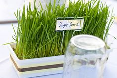 We love when a couple expresses themselves through their wedding details. The Jewish Bride, Wheat Grass, Wedding Details, Real Weddings, Centerpieces, Herbs, Center Pieces, Herb, Table Centerpieces