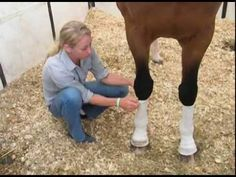 Amy Momroe, Trainer-Competitor, part owner of Stepping Stone Farms, talks about how their barn uses Summer Whinnys™ Equestrian Boots, Equestrian Outfits, Equestrian Style, Stone Farms, Horse Supplies, Horseback Riding, Horse Riding, Trainers, Amy