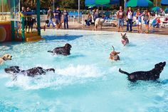 On Saturday and Sunday, October 3 - 4, Trousdell Aquatics Center is hosting the 10th annual Puppies in the Pool event.