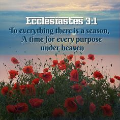Ecclesiastes time for everything Bible Quotes, Bible Verses, Jesus Scriptures, Gods Timing, Jesus Loves You, Praise And Worship, Spiritual Inspiration, You Are The Father, Prayers