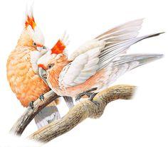 Birds tubes