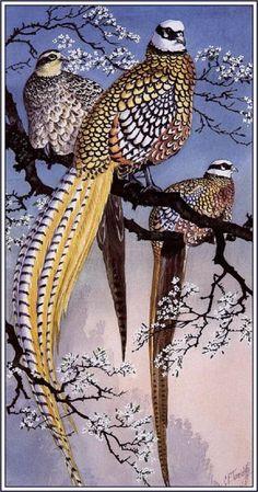 reeve's pheasants Charles Tunnicliffe -