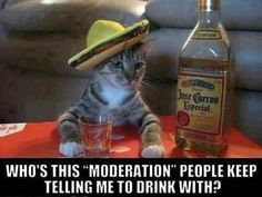 Who's this moderation people keep telling me to drink with? Cat drinking tequila. Odd humor.