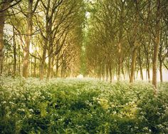enchanted tree wall mural | Large Wall Art-Enchanted Forest Wall Art-Tree Photograph of Texel ...