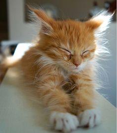 Freekibble Amazing Cats Slideshow 1