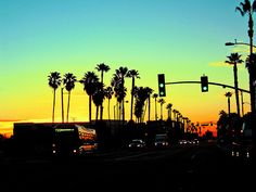 palm trees and sunsets