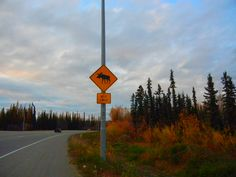 Moose Crossing Fairbanks Alaska