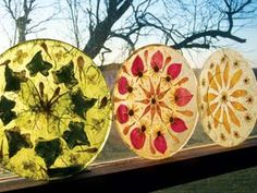 Wax paper pressed flowers just like back in school i had country lore create dried flower botanical plates junejuly 2007 by biz fairchild reynolds mightylinksfo