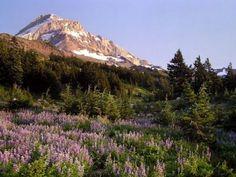 Cairn Basin from Vista Ridge Hike - Hiking in Portland, maybe...hood. 7.6 1700 elevation gain