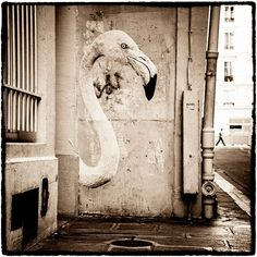 A street artist displays wild animals in the streets of Paris…