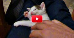 OMG This Is Adorable–A Sleepy Kitten Playing An Invisible Harp! Too Funny! | The Animal Rescue Site Blog
