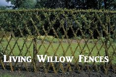 Living willow fences-This is something I have been wanting to do for quite a while.